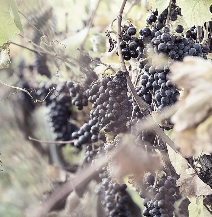 Azienda Vitivinicola Bio Maremma
